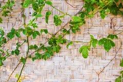 Wood bambu Mat Texture Background Royaltyfri Fotografi
