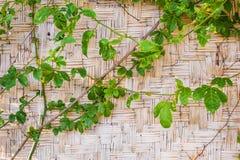Wood bambu Mat Texture Background Royaltyfria Foton