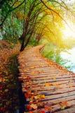 Wood bana i den Plitvice nationalparken Royaltyfri Fotografi