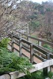 Wood bana som är utomhus- i azores Royaltyfria Foton