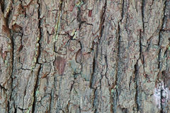 Wood bark Stock Image