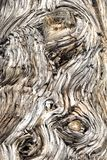 Wood bark background Royalty Free Stock Images