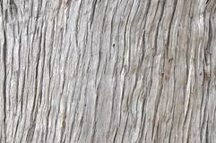Wood bark background Stock Photo