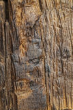Wood Bark Background. Wood bark background, natural texture stock photos