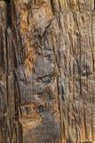 Wood Bark Background. Stock Photos