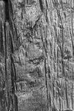 Wood Bark Background. Natural texture in black and white. Abstract Nature Background royalty free stock photo