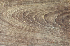 Wood bark background Stock Images