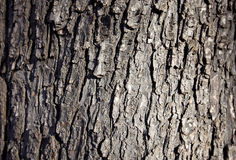 Wood bark backround Royalty Free Stock Photo