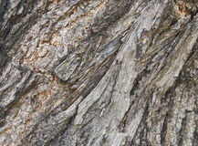 Wood bark Royalty Free Stock Photos