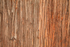Wood bark detail Stock Photos
