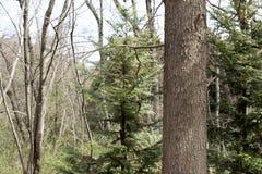 Wood bark royalty free stock photos
