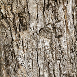 Wood bark outer surface background Royalty Free Stock Photo