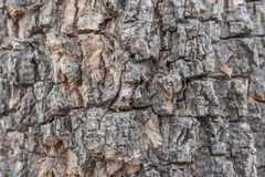 Wood bark skin Stock Photos