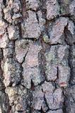 Wood bark texture Stock Photography