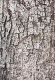 Wood bark texture. Able to use as background Royalty Free Stock Images
