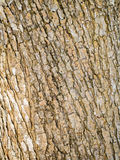 Wood bark texture Stock Photo
