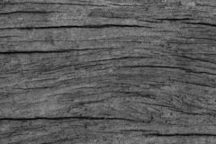 Free Wood Bark Texture Background Stock Images - 128945064