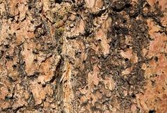 Wood Bark Texture Background Royalty Free Stock Photos