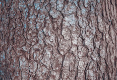 Wood bark. the texture of the bark. Backgrounds Stock Photos