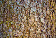 Wood bark. the texture of the bark. Royalty Free Stock Image