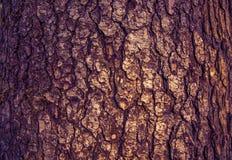 Wood bark. the texture of the bark. Stock Photography