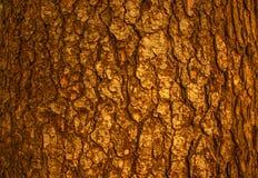 Wood bark. the texture of the bark. Stock Photos