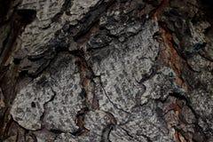 Wood bark royalty free stock images