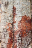 Wood bark texture Stock Image