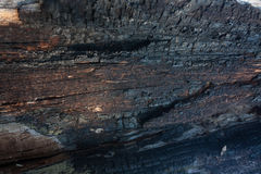 Wood bark texture Royalty Free Stock Image