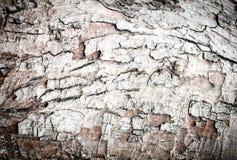 Wood bark texture Stock Photos
