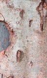 Wood bark texture Royalty Free Stock Photos
