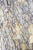 Wood bark texture Stock Images