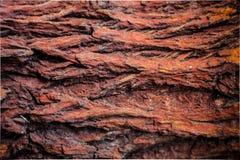 Wood bark texture Royalty Free Stock Photo