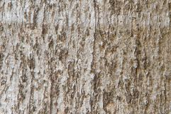Wood bark textures background royalty free stock photo