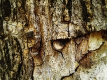 Wood Bark Tree Texture Background. photo. natur.  royalty free stock photos