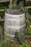Wood Barrel. An old vintage wood barrel sitting around cactus in a flower bed royalty free stock images