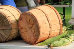 Wood barrels with fresh corn on the cob Royalty Free Stock Photo