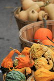 Wood baskets filled with variety of winter squash Stock Images