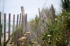 Wood beach fence wild flowers ground cover on dunes. Protected land Royalty Free Stock Photos