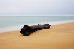 Wood On The Beach Stock Photo