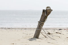 Wood on the beach Stock Images