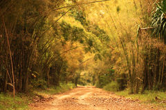 In The Wood. Beautiful lighting and Nature in the wood Royalty Free Stock Photo