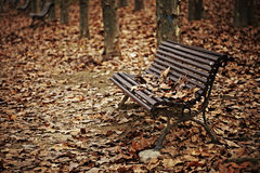 Wood bench with autumn leaves Royalty Free Stock Image