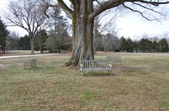 Wood bench or chair and tree with grass royalty free stock photo