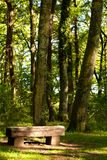 Wood Bench In the Forest Stock Photography