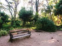 Wood bench forest. Nature sand and trees outdoor activities stock photo