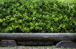 Wood bench  and green tree bush Royalty Free Stock Images