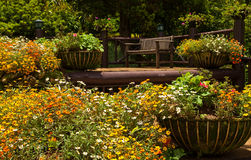 Wood Bench In Flower Garden Stock Image