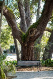 Wood Bench Under Massive Oak Stock Images