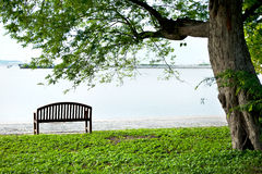 Wood bench under tree Stock Photo